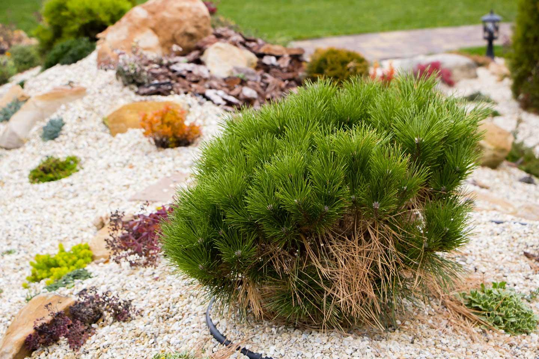 Paysagiste 17 Creation Jardin Saintes Amenagement Jardin